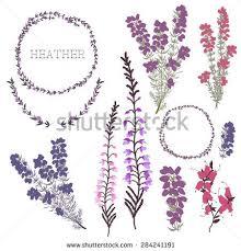 25 trending heather flower ideas on pinterest scientific name