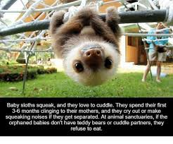 Memes Sloth - 25 best memes about baby sloth squeak baby sloth squeak memes