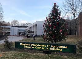 buy christmas tree buy local fresh christmas trees in maryland mdbiznews