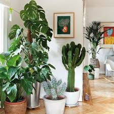 plants at home ten reasons to have plants in your home biophilia mocha casa blog