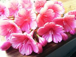flower fondant cakes fondant cherry blossom tutorial u2013 grated nutmeg