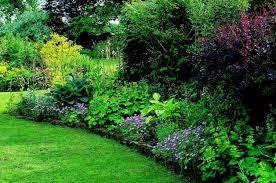 gardening shade gardening shade garden ideas