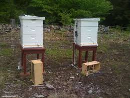 bearproofing your beehives with a bear proof electric fence