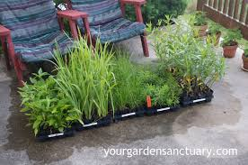 planting native plants planting plugs is a cheap and easy way to plant a landscape