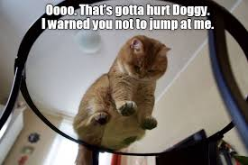 Stupid Cat Meme - stupid doggy lolcats lol cat memes funny cats funny cat