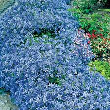 Backyard Ground Cover Options 44 Best Ground Covers Images On Pinterest Garden Ideas Shade
