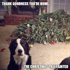 Cute Christmas Meme - 34 best christmas meme s images on pinterest christmas humor