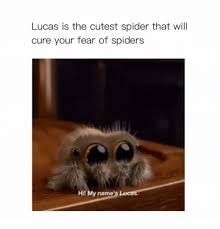 Afraid Of Spiders Meme - lucas is the cutest spider that will cure your fear of spiders hit