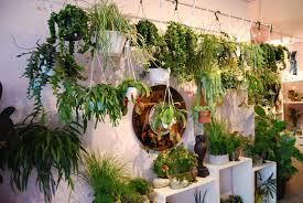 plants that don t need light 100 indoor plants that don t need sunlight excellent indoor