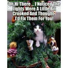 Christmas Cat Memes - pin by kimberly parker on deck the halls with cats pinterest