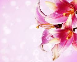 Beautiful Flower Pictures Lily Flower Stock Photos U0026 Pictures Royalty Free Lily Flower