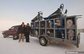 dog sledding tour yakutsk siberia russia visityakutia
