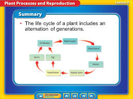 lesson 1 energy processing in plants ppt video online download