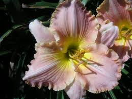 Warren Family Garden Center Daylilies D H Salmon Falls Garden Center 16 Nursery Ln Berwick