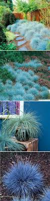 best 25 grass ideas on landscaping tips planting