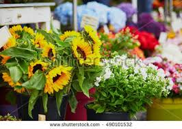 sunflowers for sale sunflowers sale on local flower market stock photo 490101532