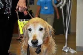 Leader Dogs For The Blind Rochester Michigan Leader Dogs For The Blind Unveils New Canine Center In Rochester Hills
