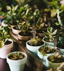 flower pot favors potted succulent favors