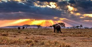15 interesting facts about serengeti