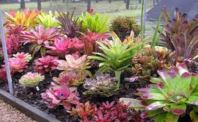 Tropical Flowers And Plants - top 7 tropical flowering plants for your patio diy home life