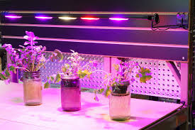 horticultural led grow lights grow light led module f6 full spectrum agilux light where you