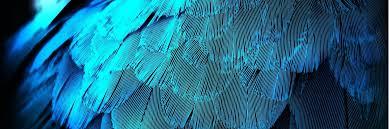blue feather wallpaper hd desktop wallpapers 4k hd
