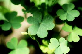 Green Plants Free Photo Shamrock Plants Leaf Nature Green Clover Forest Max Pixel