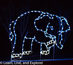 Washington Dc Zoo Lights by 100 Zoo Lights National Zoo New Year U0027s In Dc For Free Travel