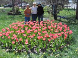 native plants for sale ellsworth garden club u0027s pink tulip festival set for may 27 the