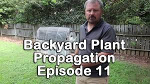 backyard plant propagation episode 11 how to root gardenias