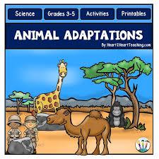 grade animal adaptations activity pack