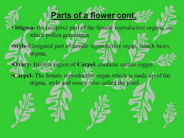 flowers and plant reproduction online lesson 1 watch this first