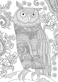 coloring page for adults owl owl coloring pages for adults free detailed owl coloring pages