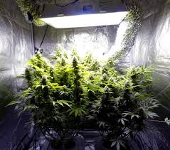 grow setups superroom 5 x 5 hps grow room supercloset 600w ping
