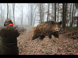 best green light for hog hunting 12 best boar hunting images on pinterest hog hunting wild boar