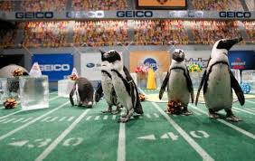 not into football then you may want to check out the puppy bowl