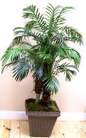 Home Landscaping Ideas by Outdoor U0026 Garden Pretty Robellini Palm Tree For Home Landscape Ideas