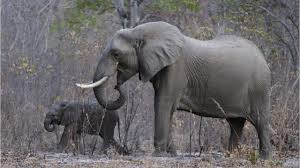 groups file suit over elephant trophy decision youtube