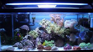 best lighting for corals a beginners guide to the best choice for aquarium corals