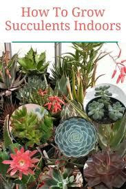 125 best growing ornamental plants images on flower