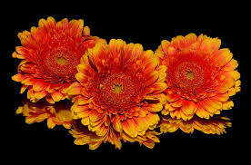 flowers images flower free pictures on pixabay