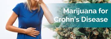 21 Diseases The Doctors Haven - medical marijuana for crohn s disease marijuana doctors