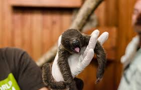 november birth animal home animal world and snake farm