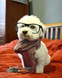 Cool Dog Meme - hipster dog meme click here to get all kinds of cool dog stuff
