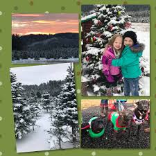 mitchell christmas tree farm home facebook