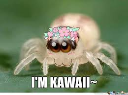 Cute Spider Meme - i just find myself a cute spider what should i do now by agi z