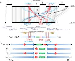 Cr Home Design K B Construction Resources by Comparative Genomic Analyses Of The Human Nphp1 Locus Reveal