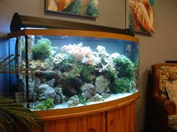 Coral Reef Home Decor With Aquarium Décor Ideas For Painting Walls Http