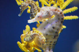 get 10 seahorse facts