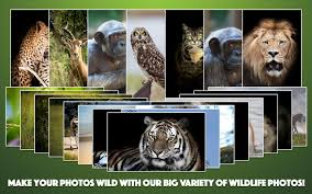 wild animal photo frames android apps on google play